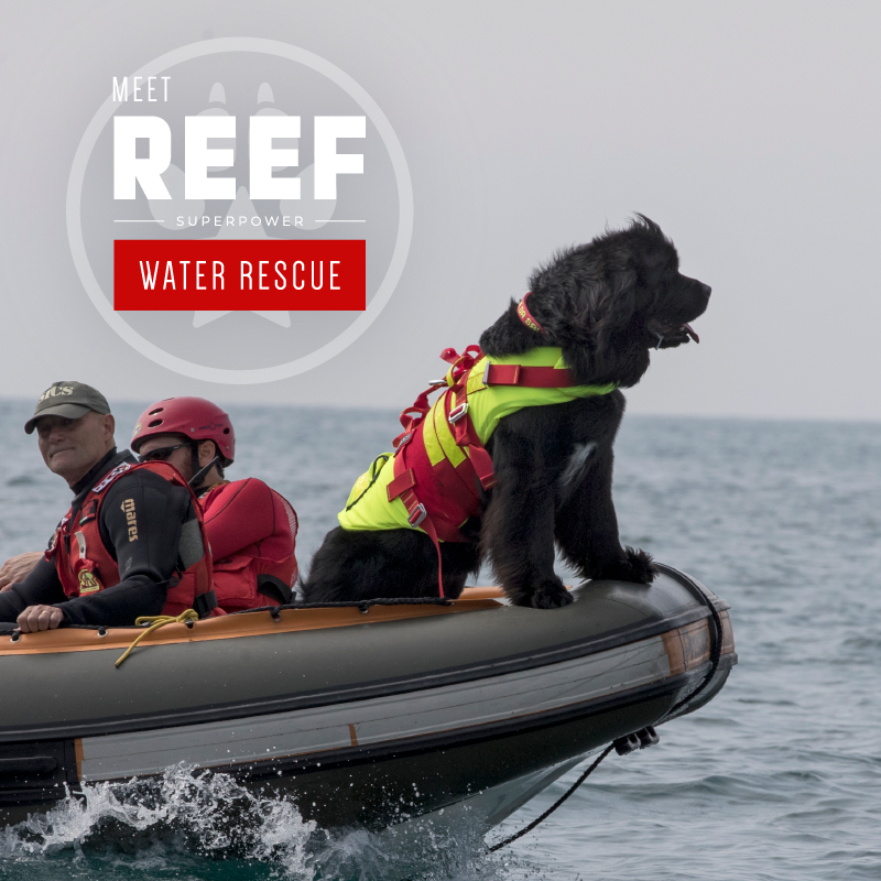 A brown dog named 'Reef' on a rescue boat.