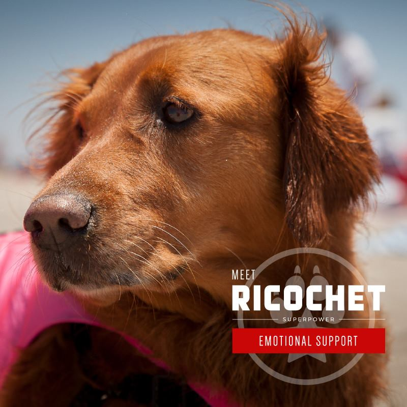 A brown dog named 'Ricochet'.
