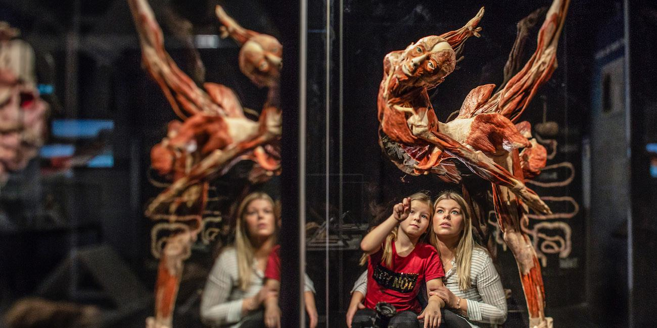 Two patrons enjoying the Body World's RX exhibit.