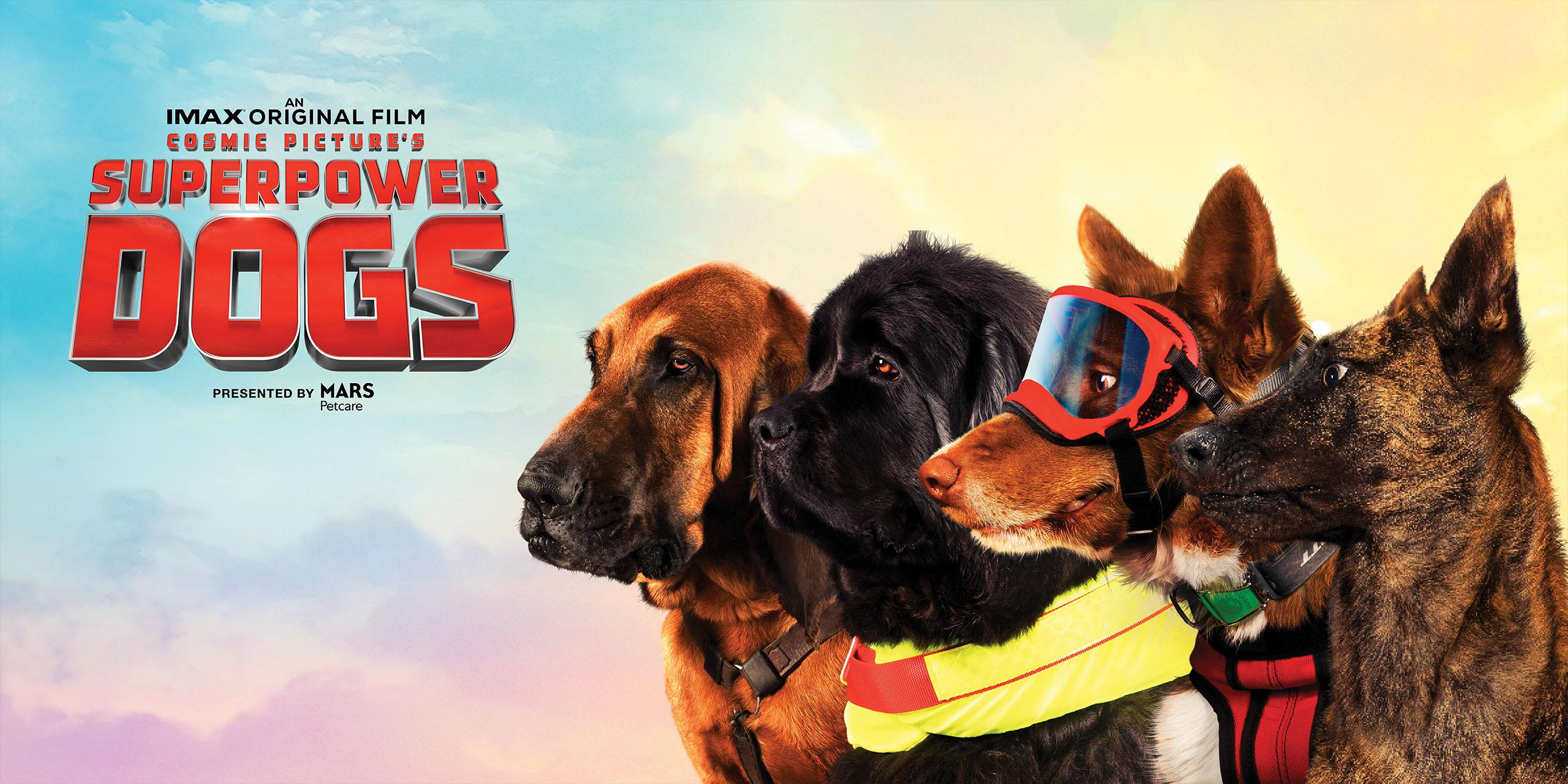 """Four of the """"superpower dogs"""" sitting and looking into the distance."""