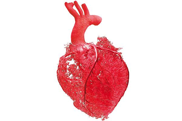 A heart organ from the Body Worlds Rx exhibit.