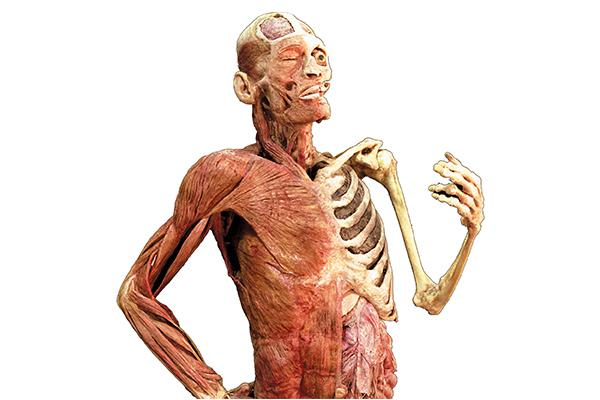 Body Worlds Rx exhibit image showing the human body of a smoker.