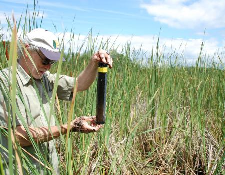 1.	Dan Engstrom sampling sediments in a sulfate-enriched cattail-dominated wetland