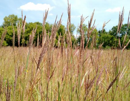Research on Restoring Prairie and Giving Native Species the Advantage