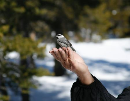White & black bird on a persons hand.