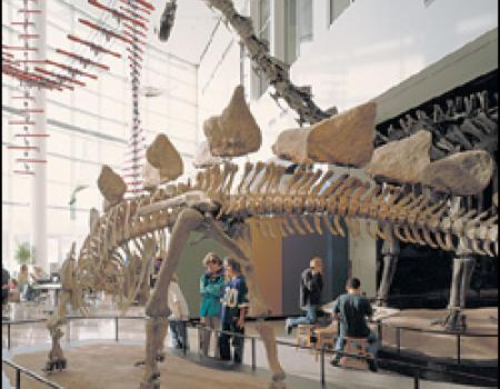 Dinosaurs and Fossils Gallery