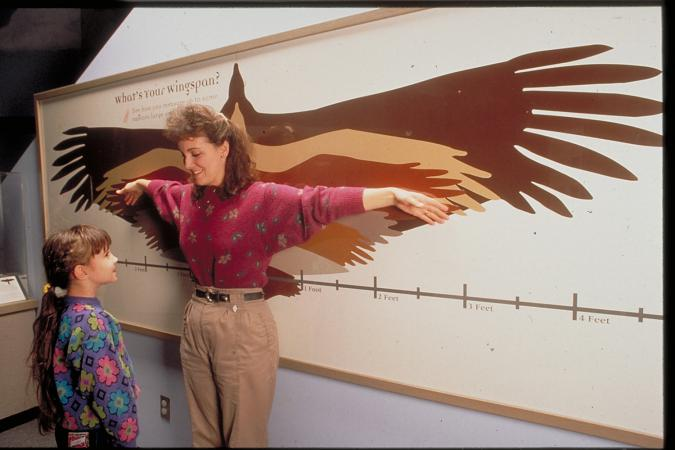 What's Your Wingspan?